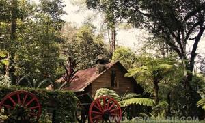 Orquigonia – El Rincón de las Orquídeas
