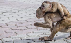 Mono problema